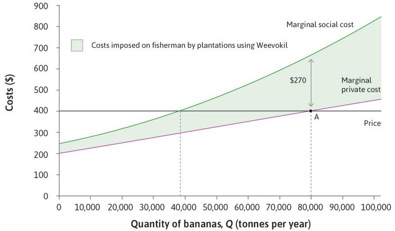 The plantations' choice of banana output.